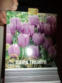 Tulip Ungu Alibi