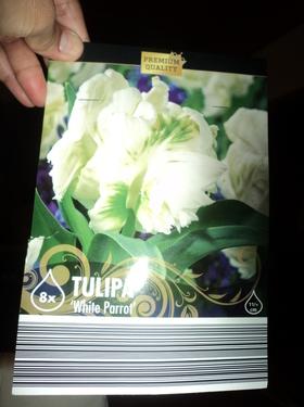 Tulip white parrot