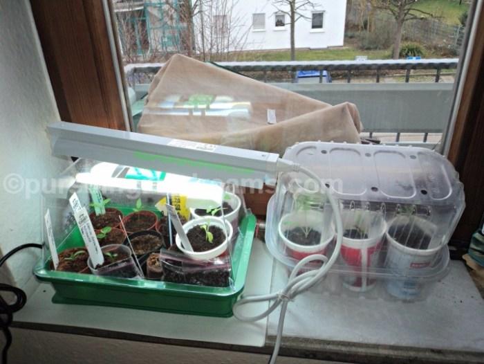 Greenhouse mini dengan lampu 10 watt dan alat pemanas. Zimmergewächshaus