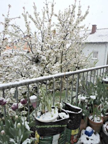 Hikss bukan winter lagi ko turun salju