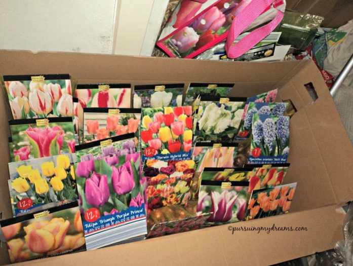 Musim Semi di Balkon Rumahku. Bibit tulip dan bibit musim semi lainnya. Ada yang saya jual dan banyak yang nanam buat sendiri. Nanam saat musim gugur 2015 mulai mekar april hingga Mei 2016.