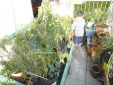 Benjamin mulai berantakin kebun saya haha