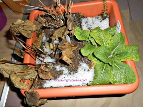 tanaman saat winter
