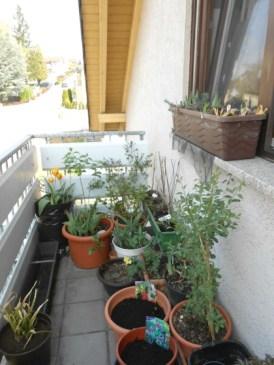My balcony garden on springtime 2017. Balkon depan