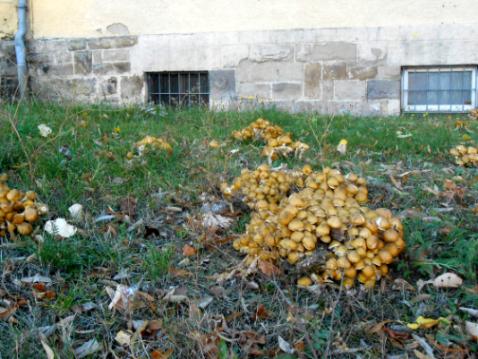 lihat jamur liar tumbuh banyak
