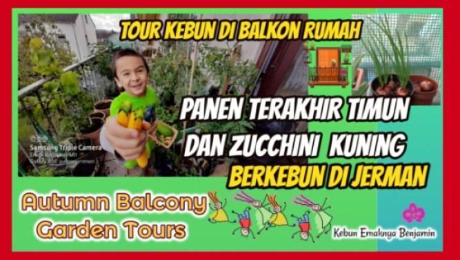 Tour Kebun di Balkon Rumah Sambil Panen Timun dan Zucchini Terakhir
