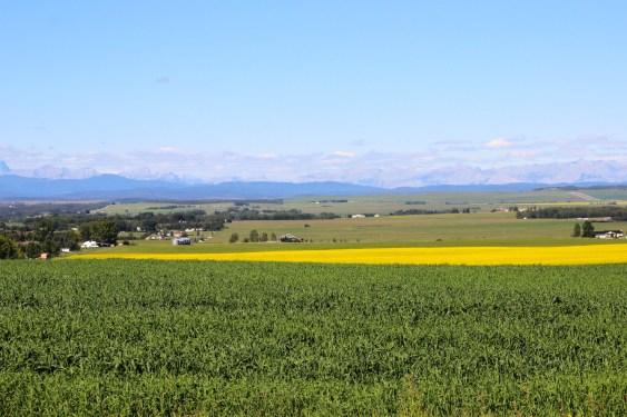 Canola fields Canada