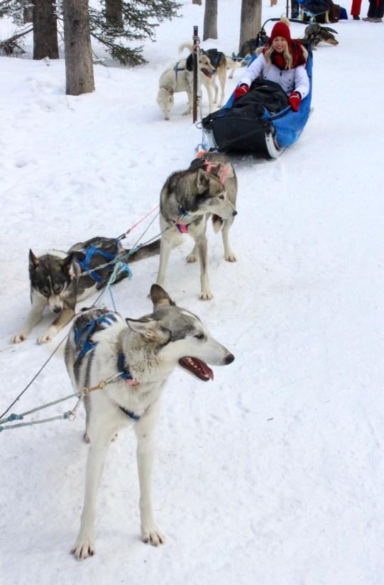 Dog Sledding experience in Banff, Alberta, Canada