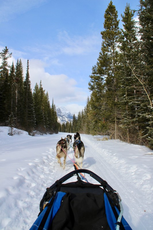Bucket List Travel: Where to experience the best dog sledding