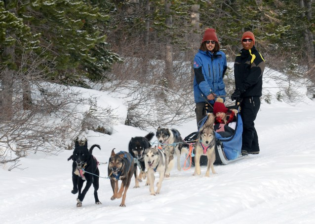 Howling Dog Tours in Canmore, Alberta
