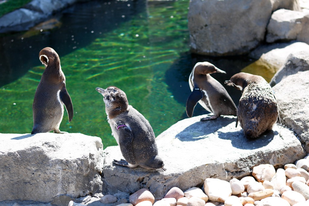 Calgary Zoo tickets - how to use AIR MILES to get tickets to great attractions this summer!
