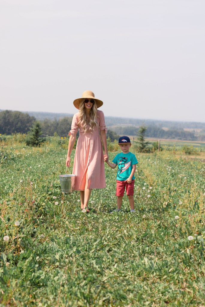 Sunflower Fields in Alberta - Sunflower Maze - Fall Family Photography ideas- travel