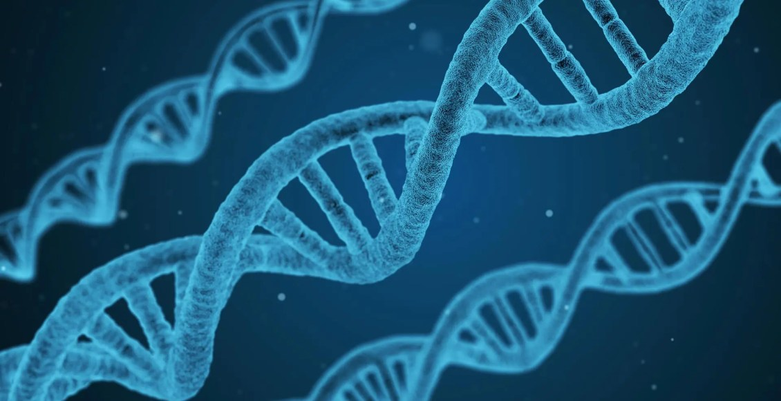 The Importance Of Methylation Support   El Paso, TX Chiropractor