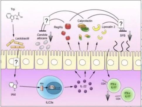 Aryl hydrocarbon receptors