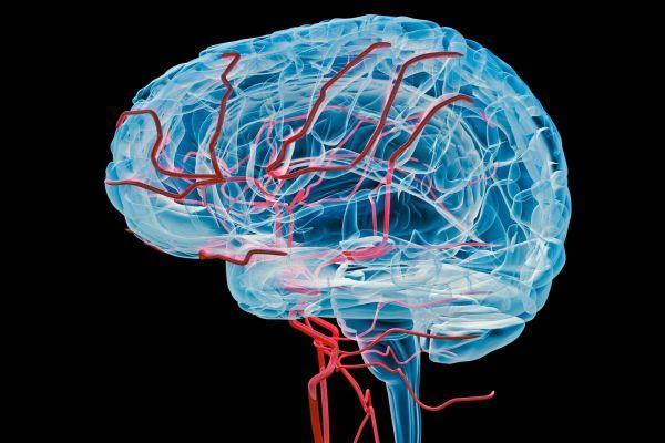 Functional Neurology: 8 Steps to Improve a Leaky Blood-Brain Barrier | El Paso, TX Chiropractor