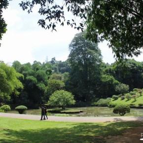 Royal Botanical Gardens - Peradeniya