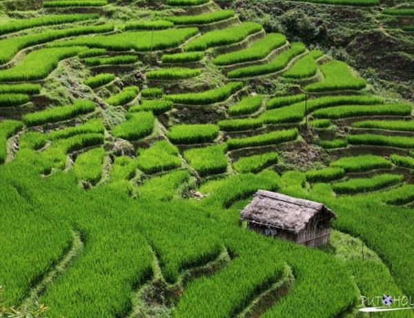 Good Morning Vietnam – Beautiful SAPA