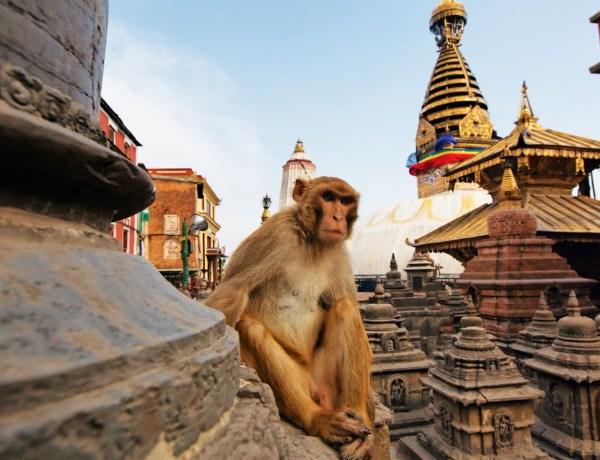 FlyDubai akcija – Povratne aviokarte za Nepal već od 268€