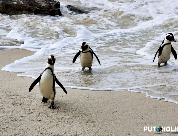 Plaža Boulders – Upoznajte afričke pingvine