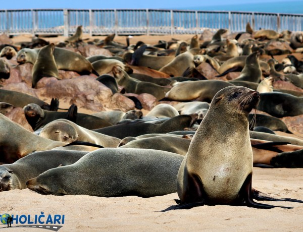 Cape Cross – Upoznajte najveću koloniju morskih lavova