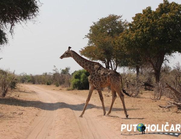 Afrika – Povratne aviokarte za Bocvanu već od 457€