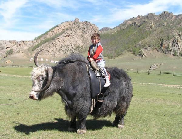 Mongolija by Darjan Bižupić