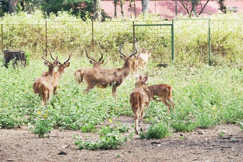 Para rusa yang menggemaskan