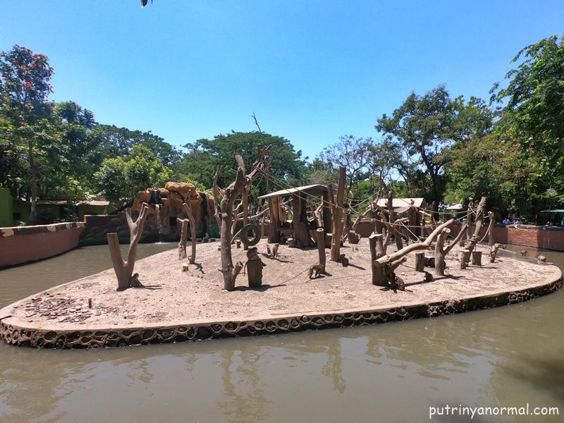 Do you spot the monkeys?