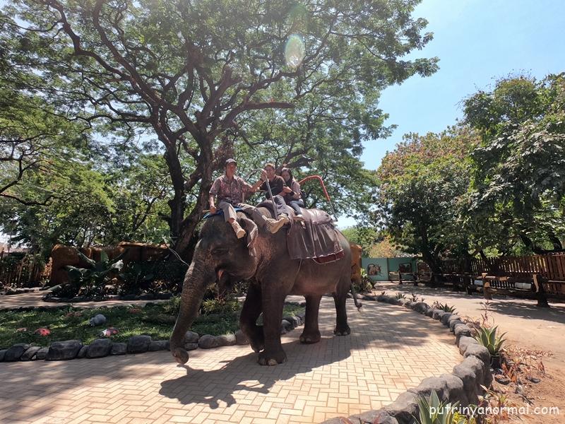 Gajah yang ditunggangin ini bikin Raka simpatik banget