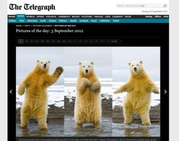 urso-dancando