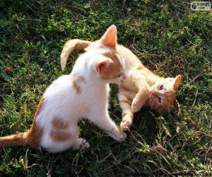 Katzen spielen puzzle