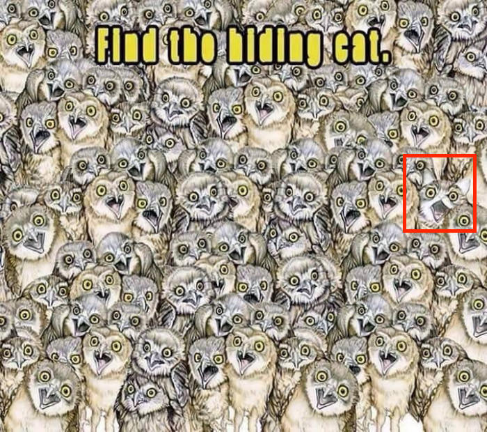 Where Is The Cat Hiding In The Owl Picture