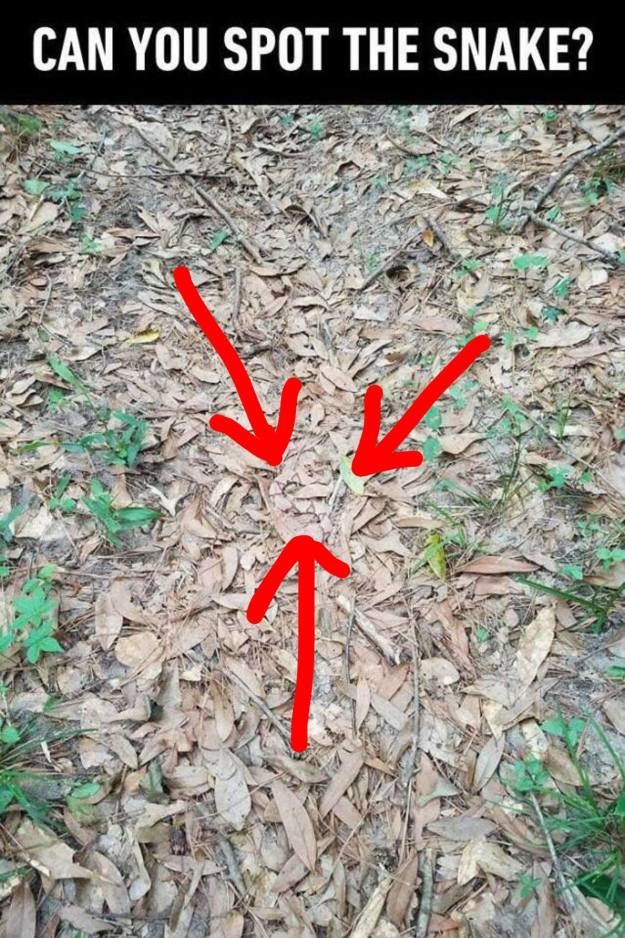 spot-the-snake-puzzle-answer