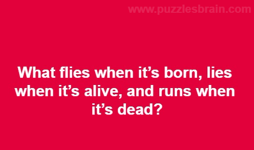 what-flies-born-lies-alive-runs-dead-riddles
