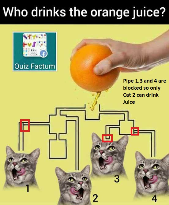 which-cat-drinks-juice-first-puzzle-Answer