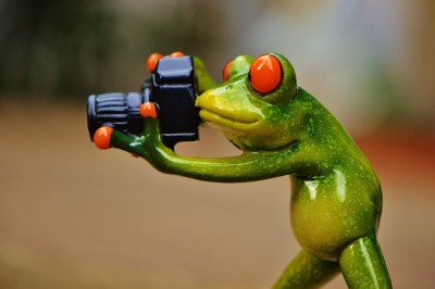 frog-888798_960_720
