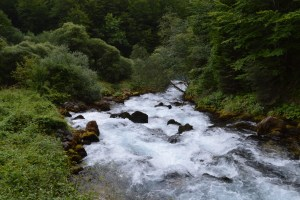 Ljutica-neukrotiva snaga prirode