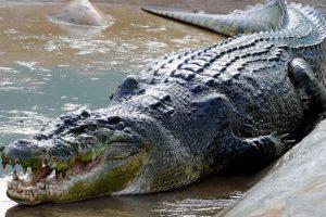 Krokodil pojeo dječaka pred bratom i sestrom