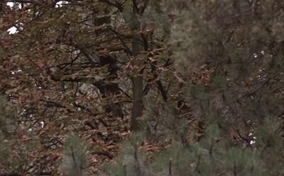 Suši se lišće divljeg kestena u gradskom parku