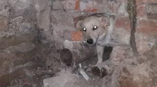 Vatrogasci oslobodili psa zaglavljenog u zidu podrumskih prostorija Internog odjeljenja