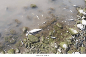 Pomor ribe u Limu zbog većeg sadržaja nitrita