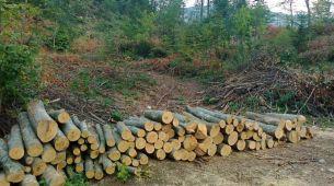 GJ Kozička rijeka: Nove krivične prijave za bespravne aktivnosti u šumarstvu