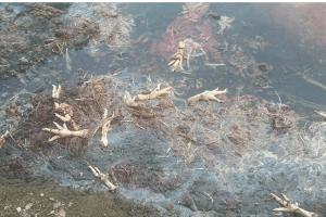 BIJELO POLJE,  EKOLOŠKI INCIDENT NA LIMU: Misteriozni zagađivač