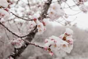 Zima neće pokazati zube, očekuje nas i toplije proljeće