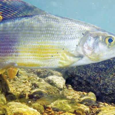 Da li ribe spavaju dok ribari sanjaju