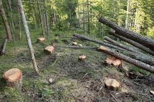 Čuvaju šume sa platom od 340 eura