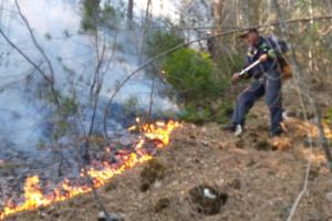 Zločin bez kazne, vatrogasci padoše s nogu