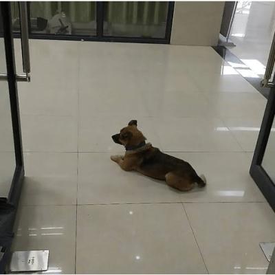 Pas mjesecima u bolnici čekao vlasnika koji je preminuo od korone