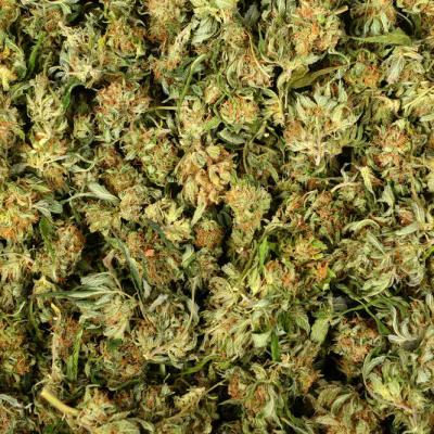 U Podgorici zaplijenjeno više od dvije tone marihuane