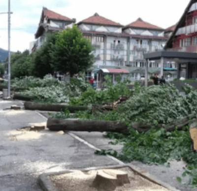 Ni skoro godinu dana od završetka rada komisije nema drvoreda u gornjem dijelu pljevaljske glavne ulice